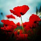 Poppy Heaven by Murray Breingan