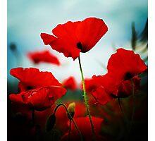 Poppy Heaven Photographic Print