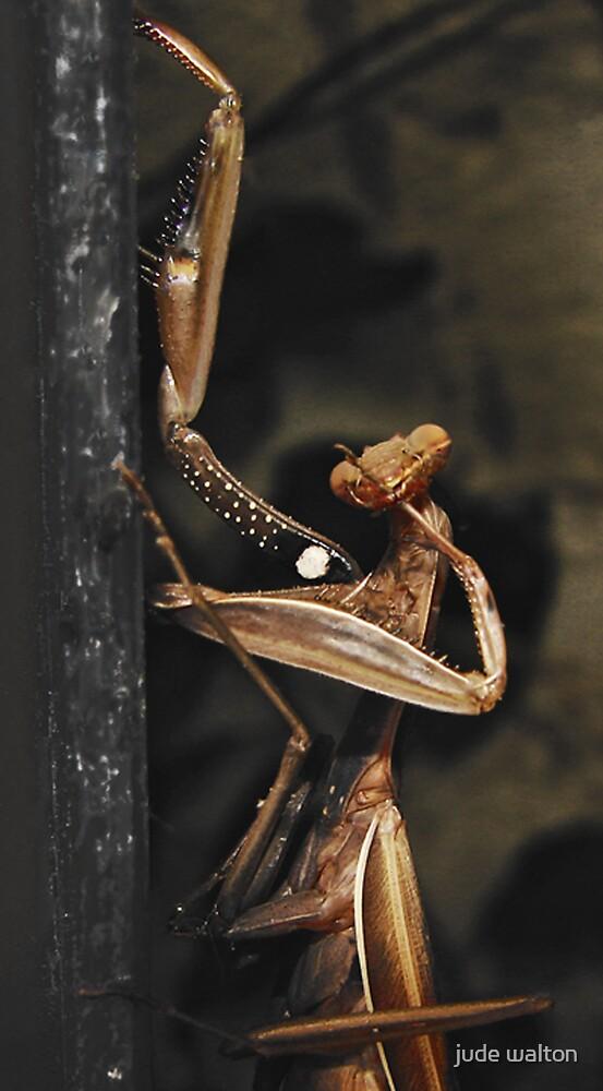 Praying Mantis by jude walton