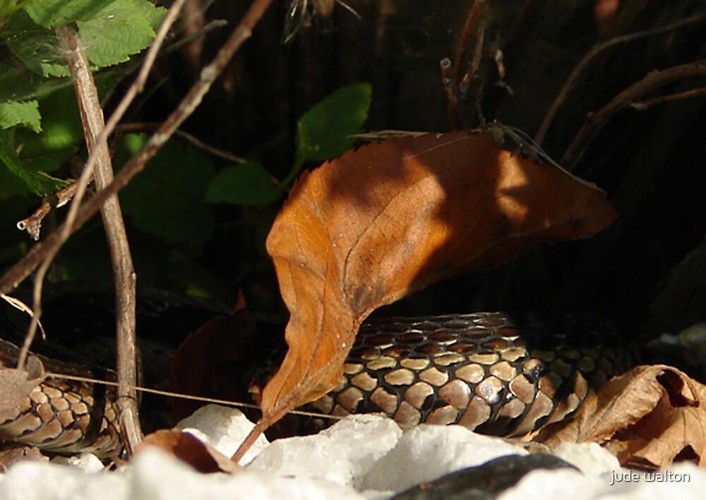 Snakeskin by jude walton