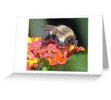 Bumble Bee(3) Greeting Card