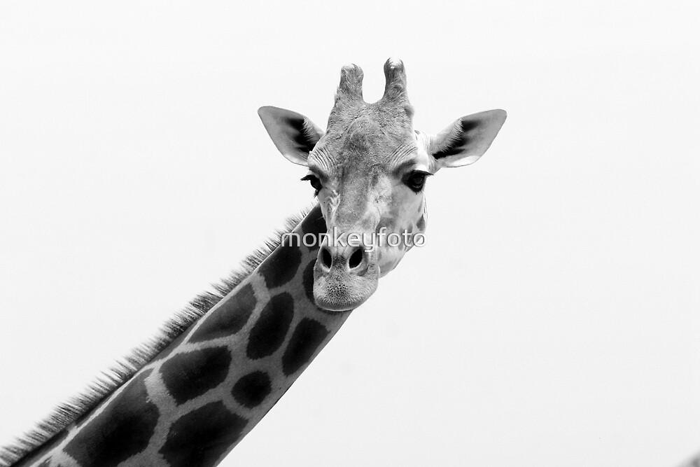Giraffe @ Taronga Zoo by monkeyfoto
