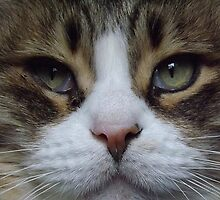 Intense Cat Face by Timothy  Ruf