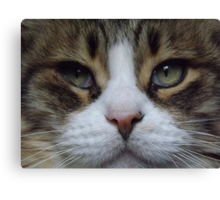 Intense Cat Face Canvas Print
