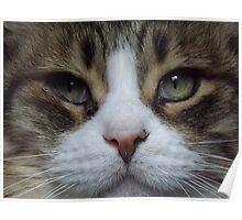 Intense Cat Face Poster