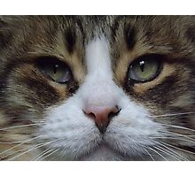 Intense Cat Face Photographic Print