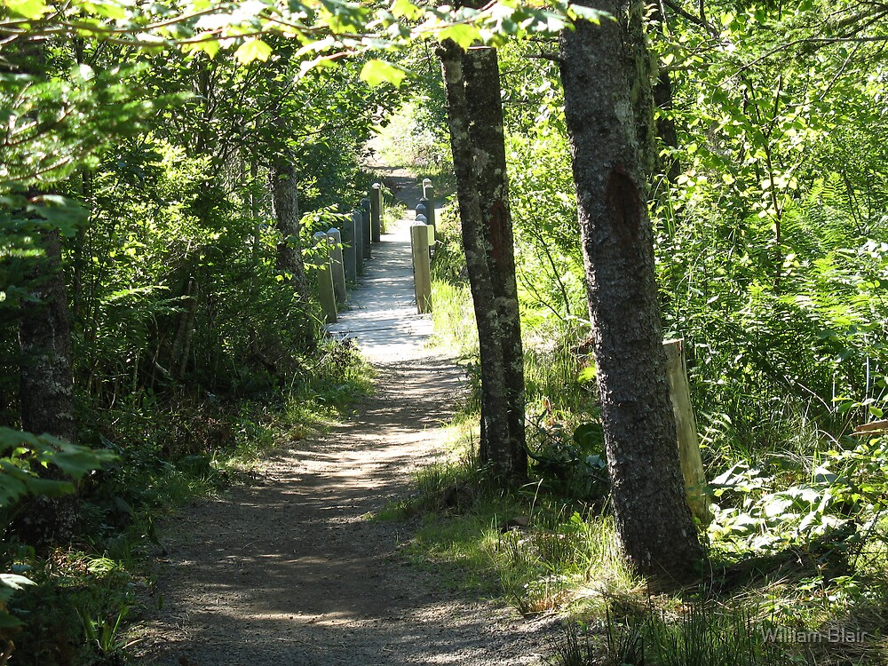 Path Thru the Woods by William Blair