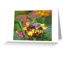 Bumble Bee (4) Greeting Card