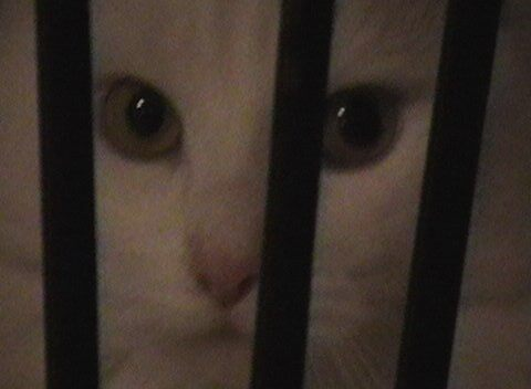 HAILEY IN JAIL by sky2007