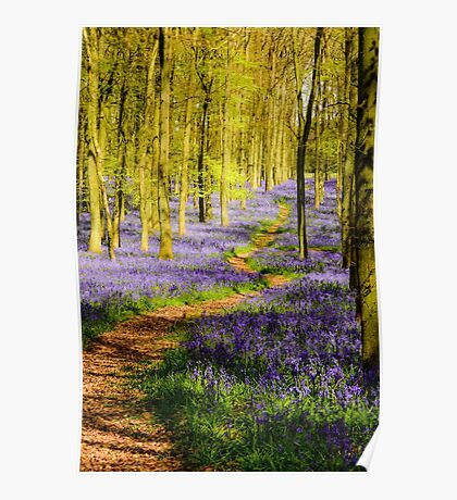 The path through the bluebells Poster