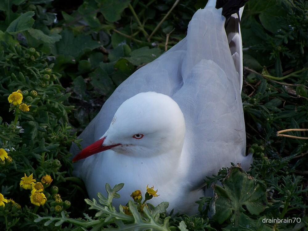 Seagull by drainbrain70