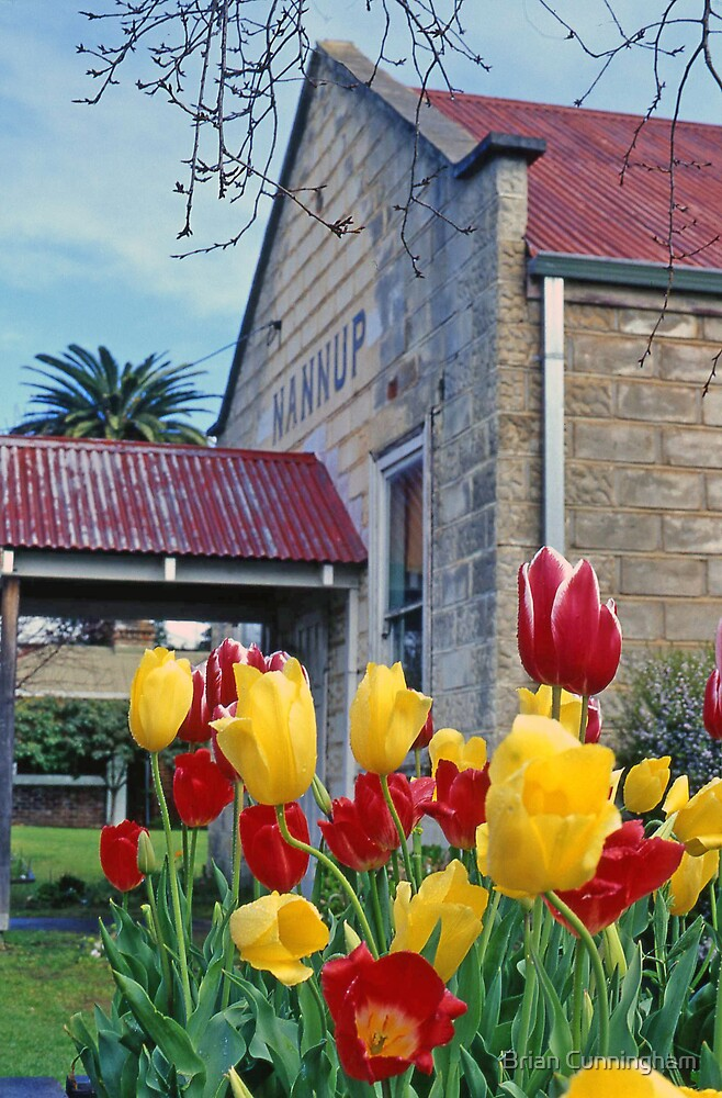 Nannup Tulips by Brian Cunningham