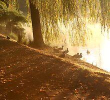 Ducks by the Lake by Sam Sneddon