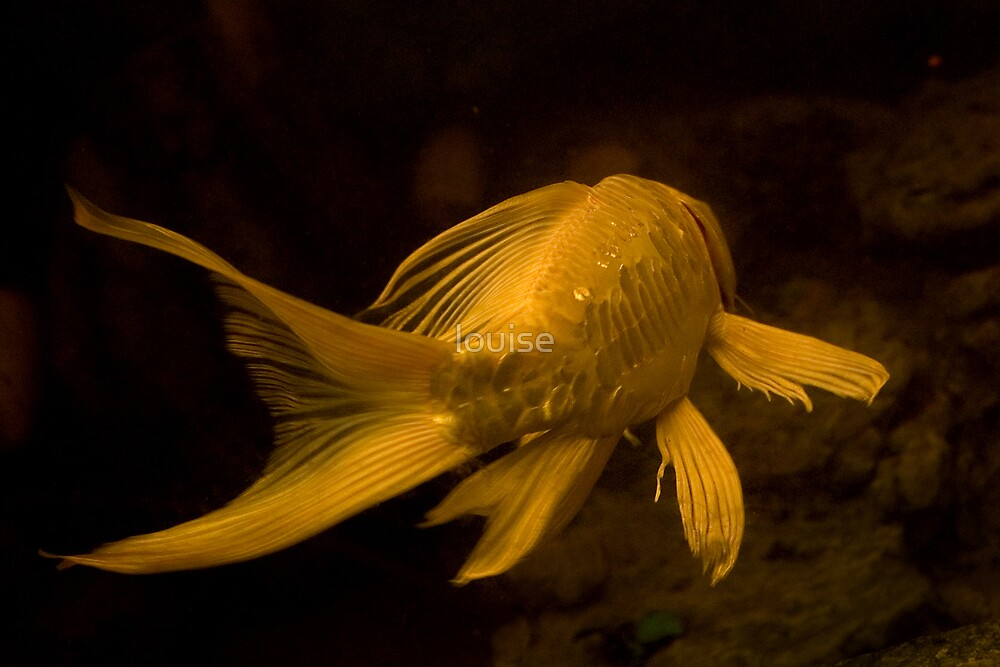 GOLD FISH by louise