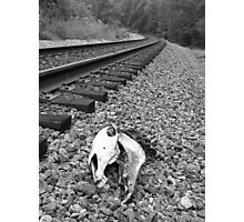 Death by the Tracks Photographic Print