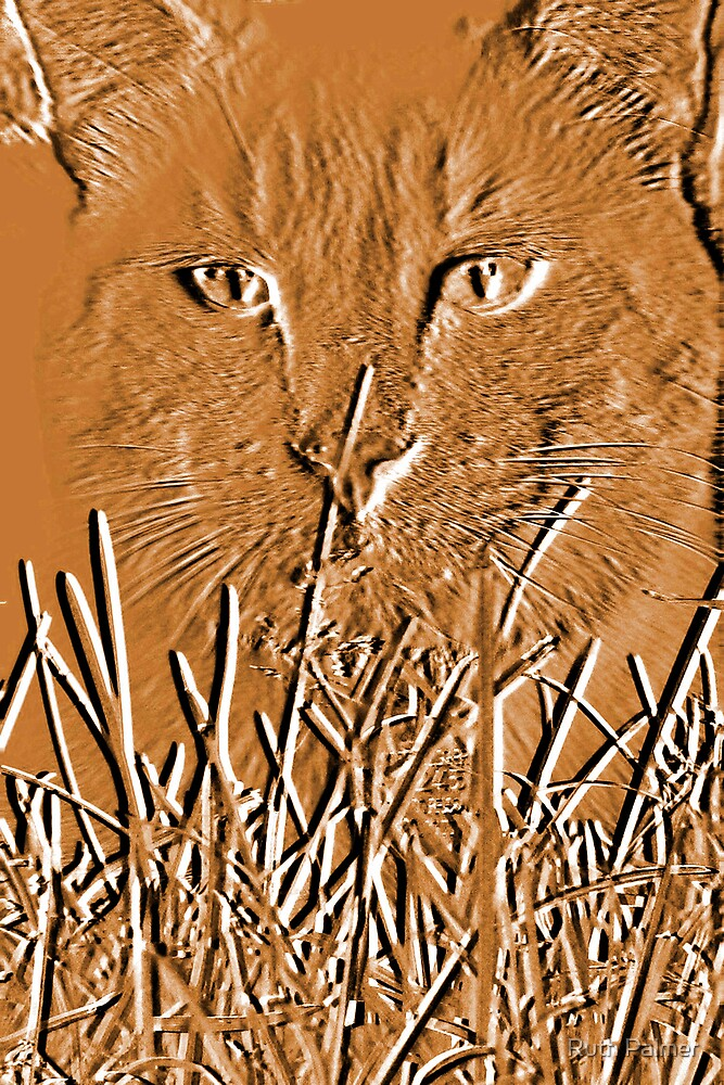 Amber Cat by Ruth Palmer