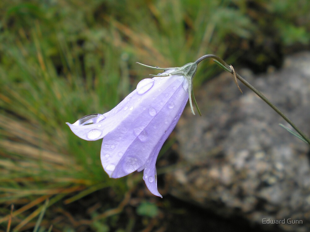 Raindrops by Edward Gunn
