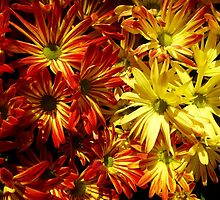 Pelee Mums two colors by WildestArt