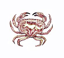 Colour Crab! by reslanh