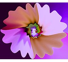 Brilliant Bloom Photographic Print