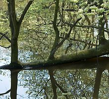 Tree and it's reflection in an Amsterdam canal by Katherine Maguire