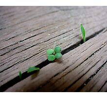 New Life 2 Photographic Print