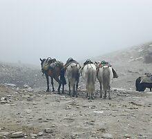 Horses by jchadwick