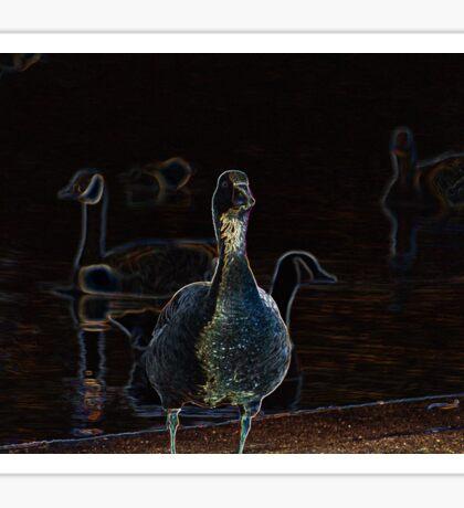 Ducks  Sticker