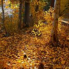 Light Falling on Fallen Leaves by Barbara  Brown