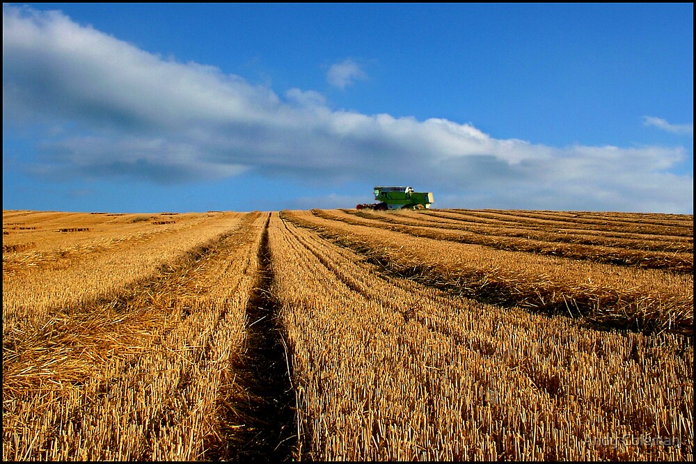 Harvest by Andy Coleman
