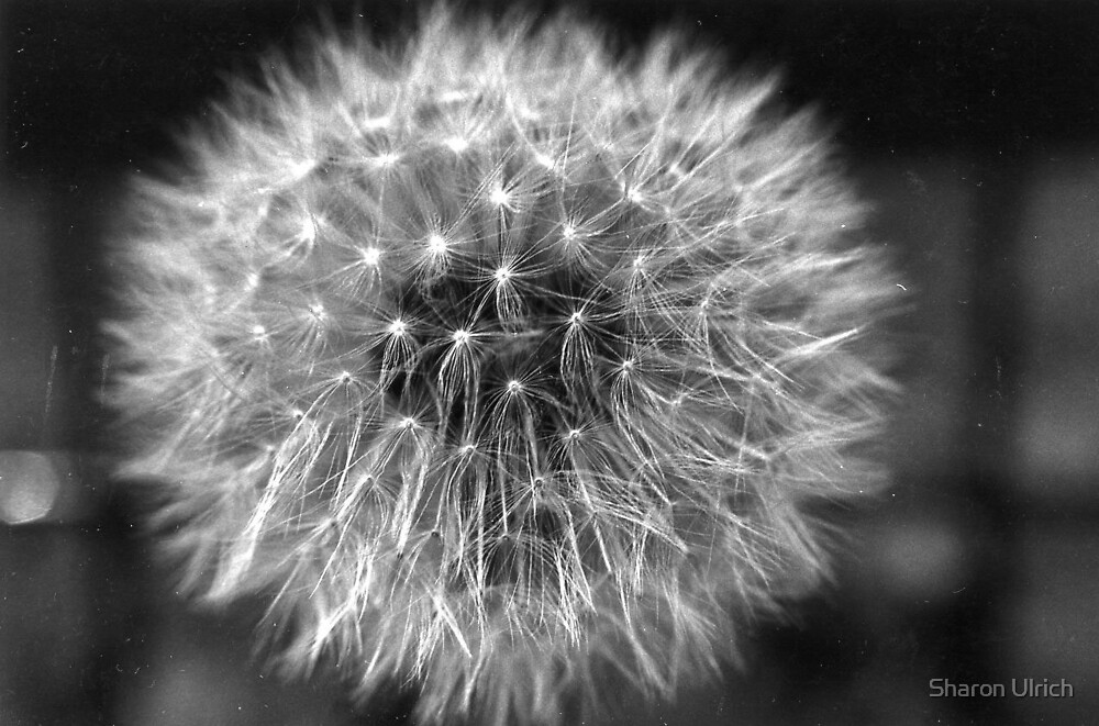 Make a Wish by Sharon Ulrich