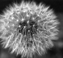 Make a Wish by Sharon Ulrich
