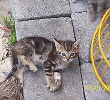 Kitten by gheil