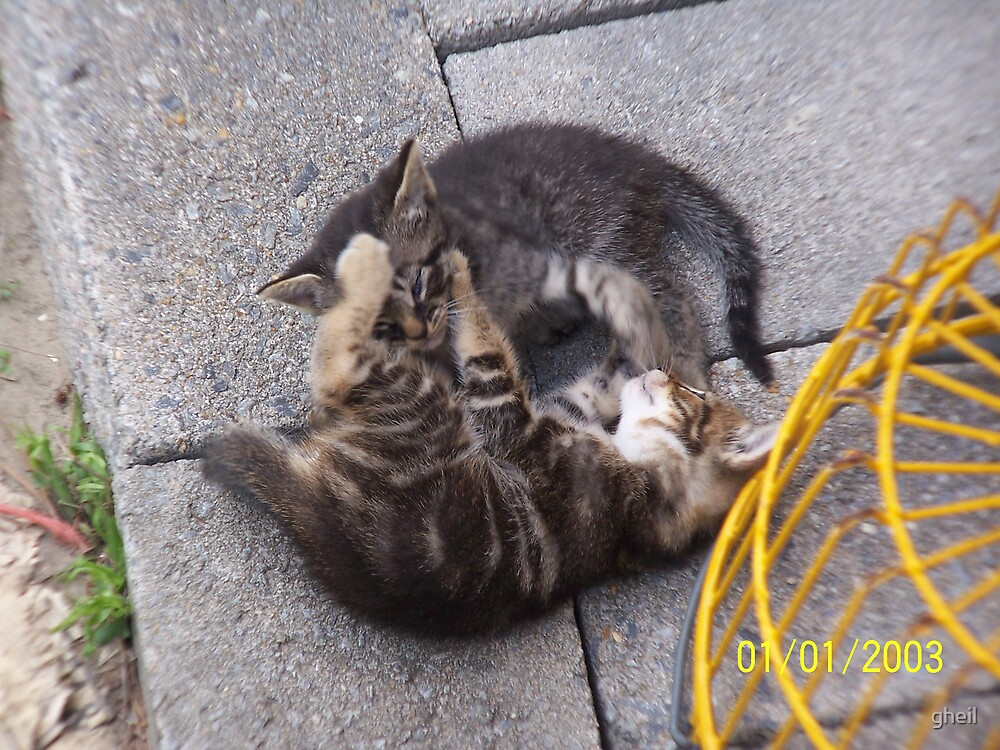 Kittens Playing by gheil