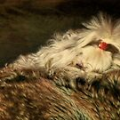 A Long Winter's Nap by Lois  Bryan