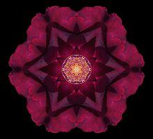 Beach Rose I by David Bookbinder