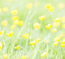Buttercups by GinnyScholes