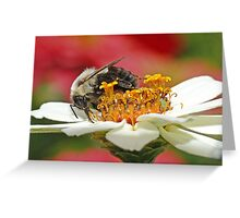 Bumble Bee (5) Greeting Card