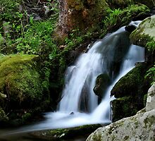 Whispering Waters by Gary L   Suddath