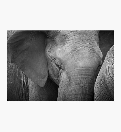 African Elephant Close-up Photographic Print