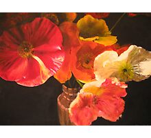 Sunlit Poppies Photographic Print