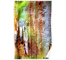 Bark: Nature's Pallet Poster
