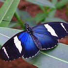 Butterfly Song by ienemien