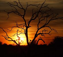 Sunset over the Okavango delta by Michael Dodd