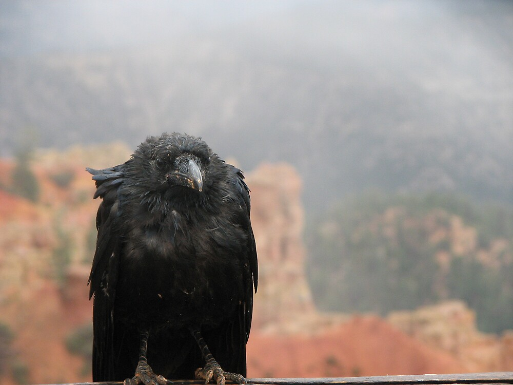 Raven in Bryce Canyon  by HelenBanham