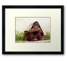 Taking shelter  Framed Print