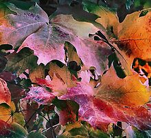 Dressed for Fall by Nadya Johnson