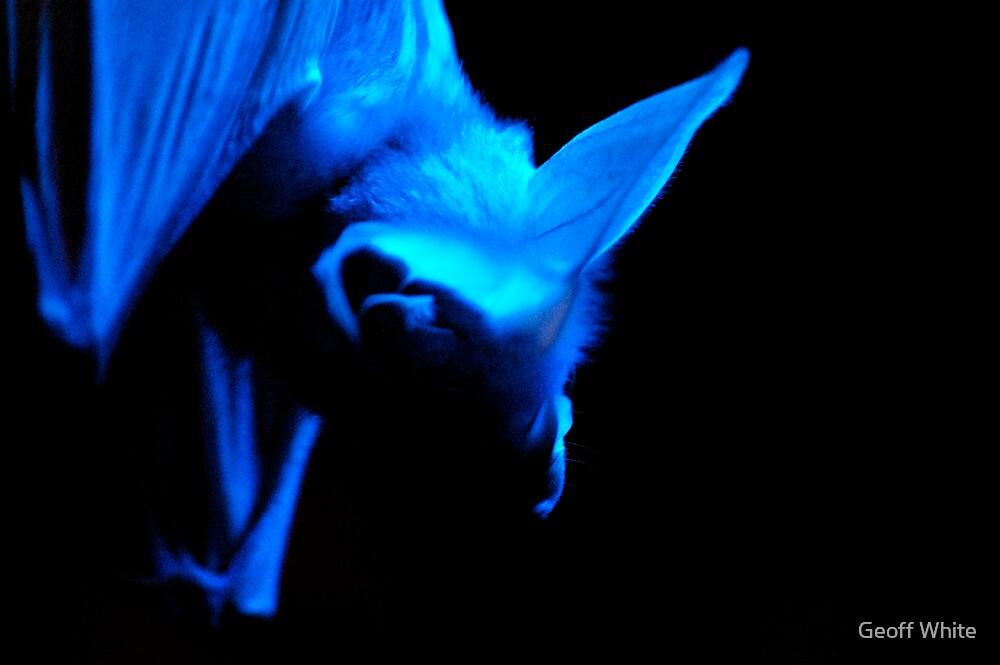 Bat by Geoff White