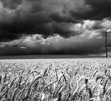 Wheat, Junee by Will Barton