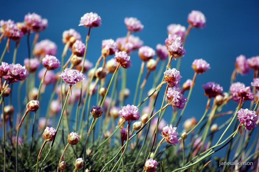 Rock Flowers by janewilkinson